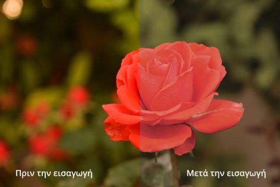 rose-rgb