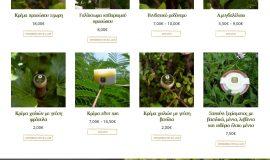 Κατασκευή ιστοσελίδων - Cumaea-website-1